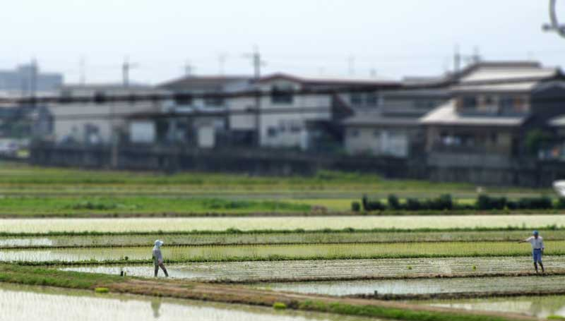 """<span style=""""color: #ffffff;"""">A Japanese rice field in Nara Prefecture</span>"""