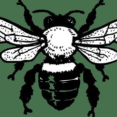 Diagram Of A Queen Bee Iphone 3gs Schematic Clipart Honey