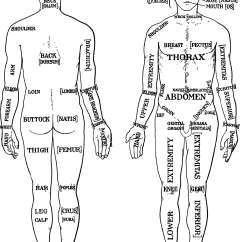 Stage Directions Diagram Person Small Business Network Design Clipart Morris Human Anatomy 1933