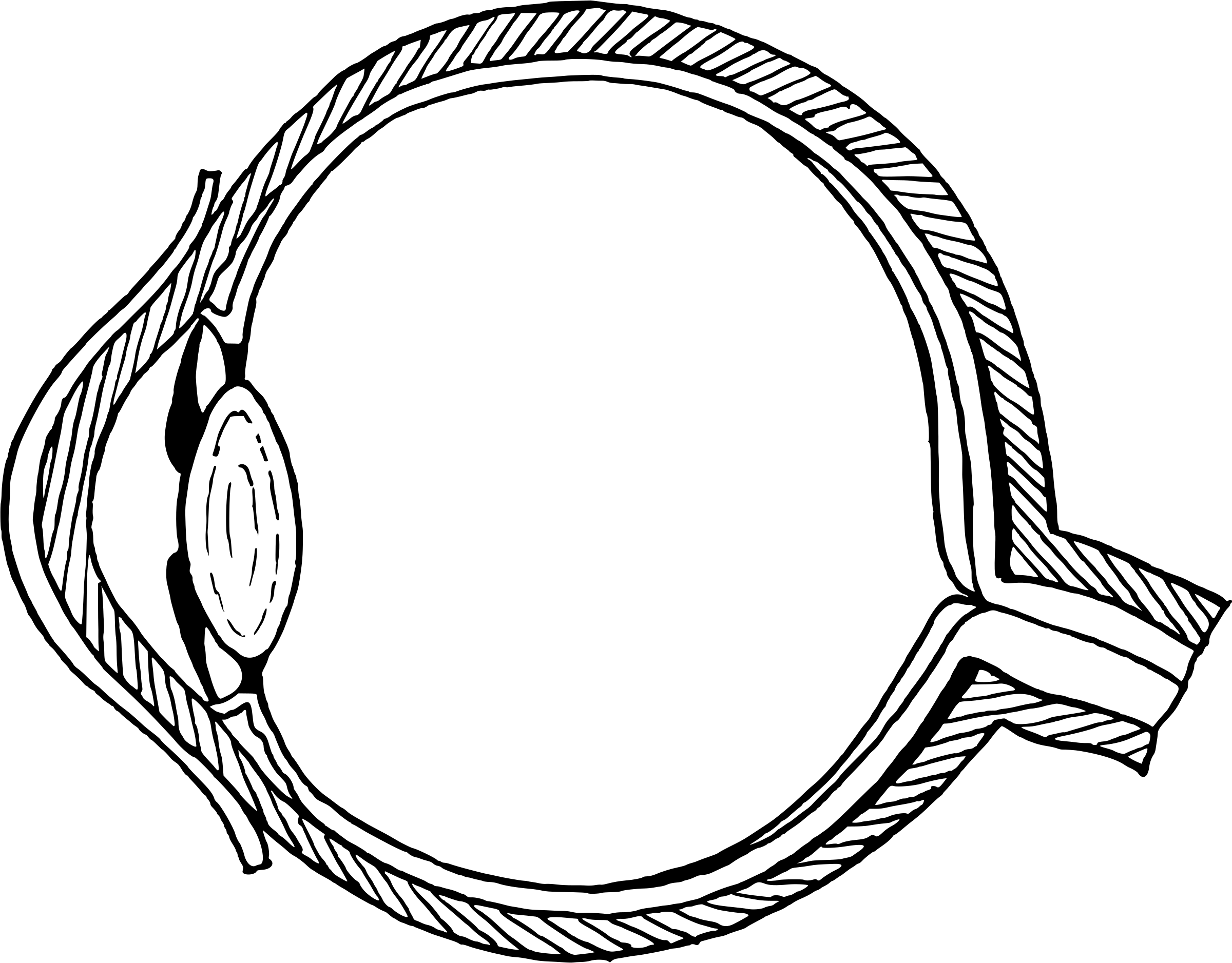 Clipart Eye Diagram Without Annotation