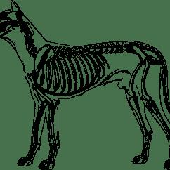 Dog Bone Diagram 91 Honda Crx Stereo Wiring Clipart Skeleton