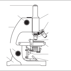 Compound Microscope Diagram 73 Dodge Dart Wiring Clipart Parts Labeled