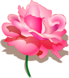 rose clipart svg pink clip flowers tomas imagenes open arad openclipart bing
