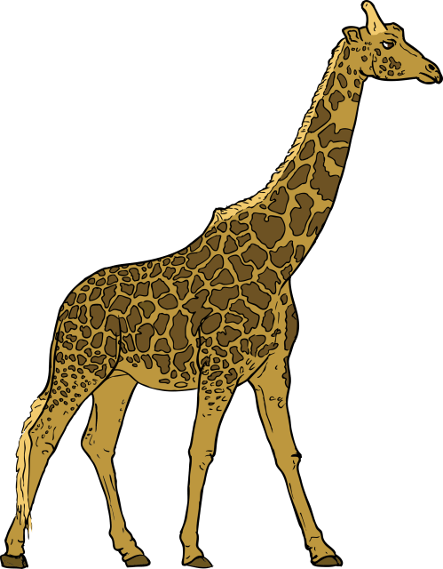 small resolution of giraffe