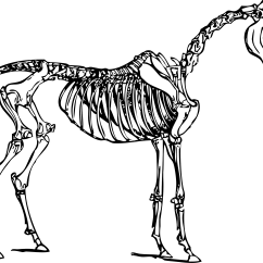 Horse Skeleton Diagram Labeled Types Of Electrical Wiring Dog Eight Ineedmorespace Co Clipart Game