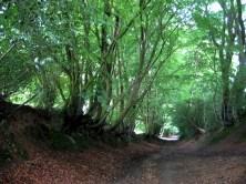 Hindhead, Surrey