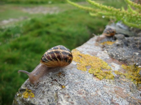 snails at Constantine Bay
