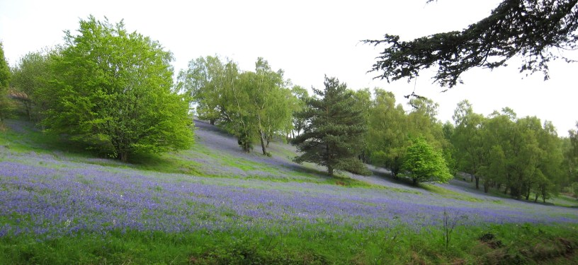 Black Hill, Herefordshire