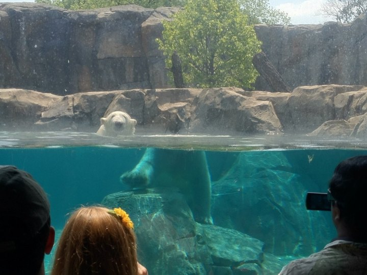 People looking at a bear in his habitat in the zoo. The side is transparent, so people can see the bear standing in the water from the side, partially submerged. Due to the light refraction caused by the water and the glass, the bear's head is located at a different place than his submerged body. Dramatically displaced.
