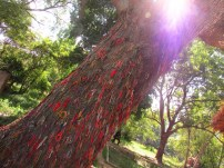 Offerings in memory of the children and babies who were executed by being swung against this tree, 2014.