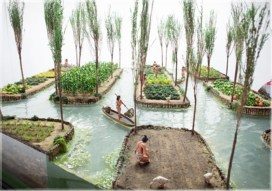 Chinampas were created by staking out the shallow lake bed and then fencing in the rectangle with wattle. The fenced-off area was then layered with mud, lake sediment, and decaying vegetation, eventually bringing it above the level of the lake. Often trees such as cypress were planted at the corners to secure the chinampa. In some places, the long raised beds had ditches in between them, giving plants continuous access to water and making crops grown there independent of rainfall. Chinampas were separated by channels wide enough for a canoe to pass. These raised, well-watered beds had very high crop yields with up to 7 harvests a year.