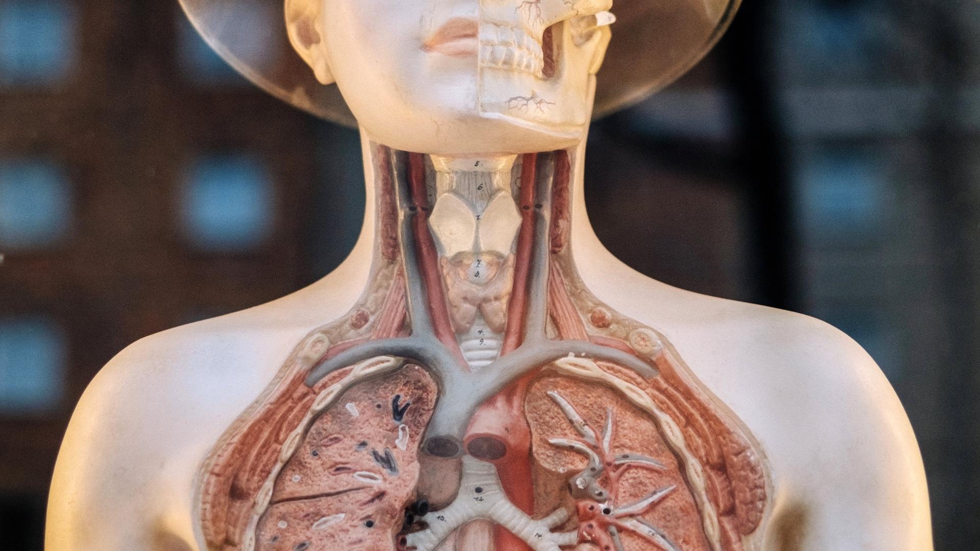 medical_model