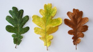 the beautiful diversity of foliage
