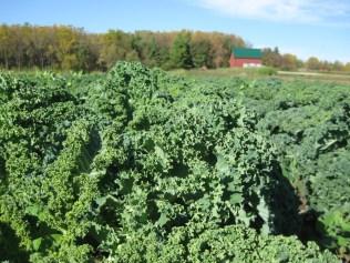 farm, allia,veggie pictures 027