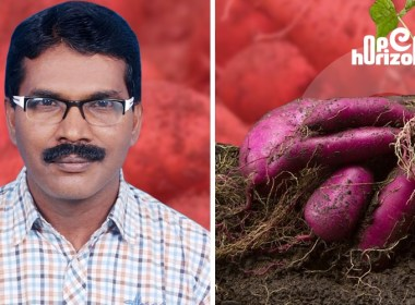 indian-council-of-agriculture-research-india-sweet-potato-orange-purple