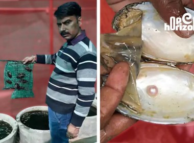4-lakh-profit-per-year-pearl-cultivation-started-at-30-thousand-rupees