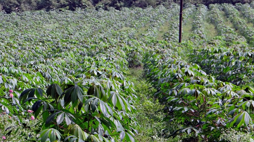 start a farming business in Cameroon