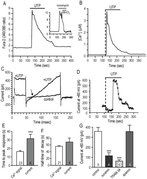 The metabotropic purinergic receptor agonist, UTP