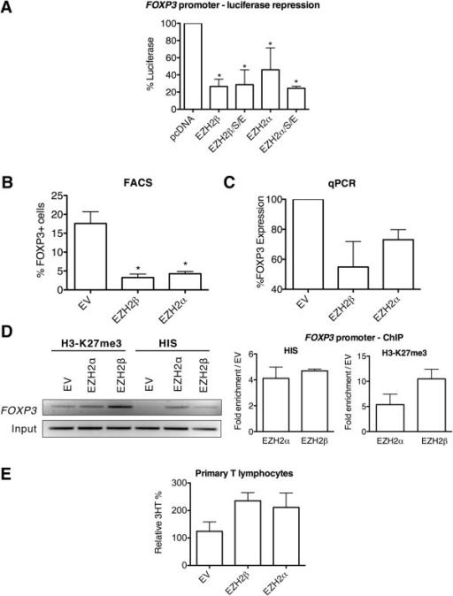 EZH2β represses transcription through H3-K27