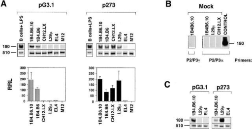 The differential activity of p273 and pG3.1 in B cell