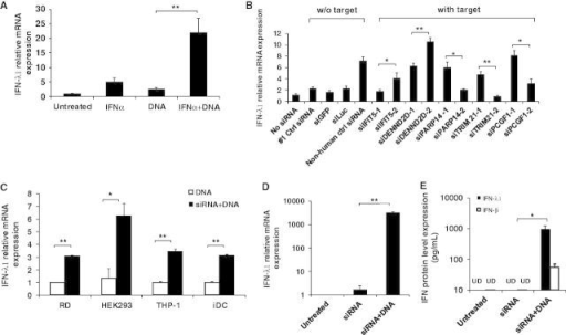 siRNA unexpectedly enhances DNA-mediated IFN-λ1 induct