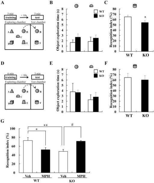 DGKβ KO mice showed an attention-deficit behavior in o