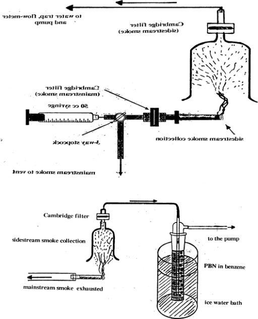 f1-ijerph-06-00445:Tobacco Smoke: Involvement of Reactive