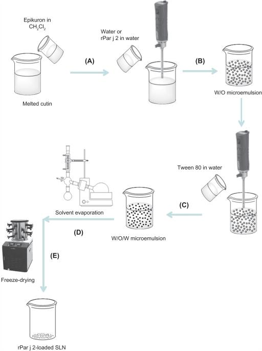 Schematic diagram of solid lipid nanoparticle (SLN) pre