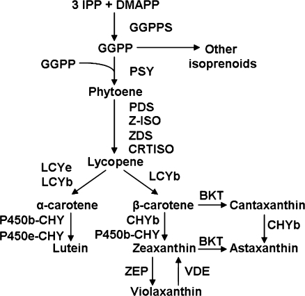 Fig1:Enhancement of carotenoids biosynthesis in