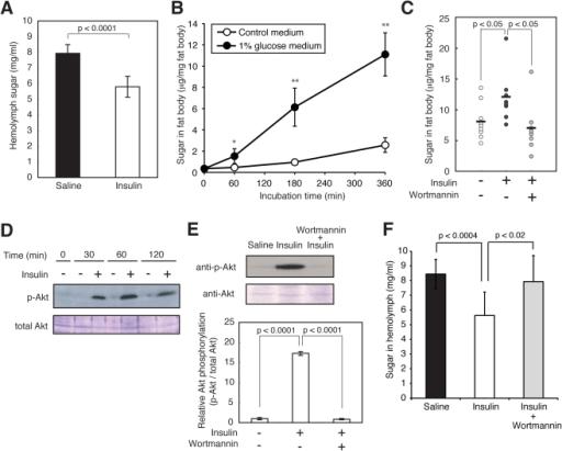 pone-0018292-g004:An Invertebrate Hyperglycemic Model for