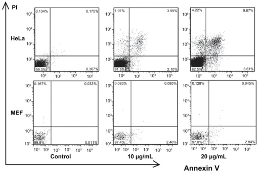 Flow cytometry analysis of HeLa and MEF cells treated w