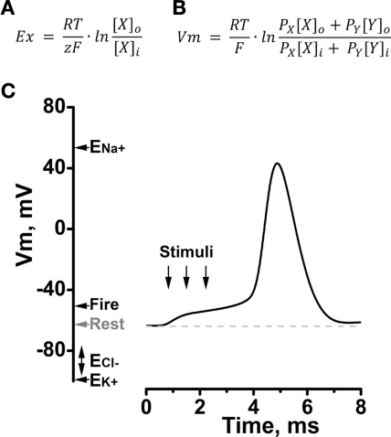 Figure 1:A Role for K2P Channels in the Operation of