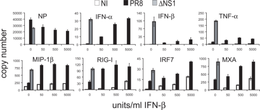 ppat-1000193-g007:Interferon-β Pretreatment of