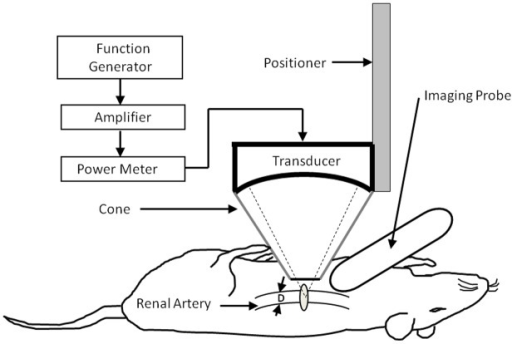 Schematic diagram of the experimental setup.The renal a