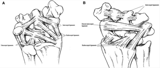 fig1-1941738109347981:Sports-Related Wrist Injuries in
