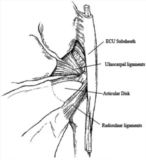 The triangular fibrocartilage complex consists of the r