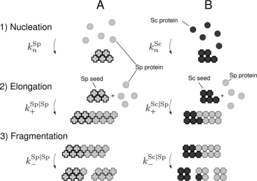 Figure 3:Relationship between Prion Propensity and the