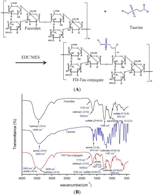 (A) Schematic diagram of the fucoidan-taurine (FD-Tau