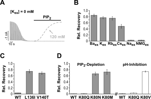 PIP2 Depletion Induces K+-Dependent Inactivation Proces