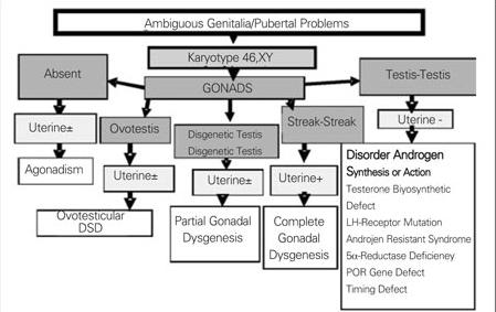 Figure 4. Diagnostic algorithm of 46,XY DSD for new cla