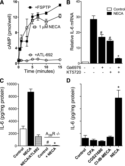 NECA increases IL-6 production in mouse aortic ECs by a