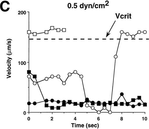 Figure 5:Threshold Levels of Fluid Shear Promote Leukocyte