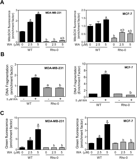 pone-0023354-g006:Withaferin A-Induced Apoptosis in Human