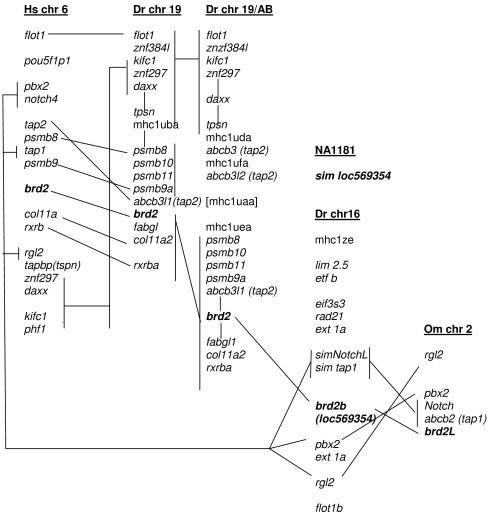 Figure 9:Zebrafish brd2a and brd2b are paralogous members