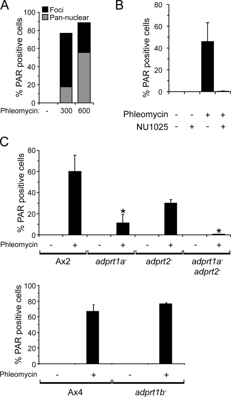 Adprt1a is required for PARylation after DSBs. (A) Ax2