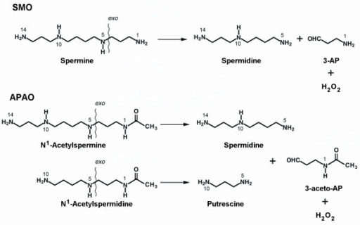 Enzymatic reaction catalyzed by SMO and APAO proteins