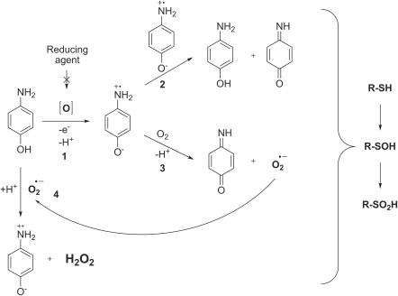 pone-0027197-g007:Redox-Based Inactivation of Cysteine