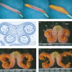 Dna And Rna Venn Diagram Kc Hilites Wiring 2: Cells - Pmlawingscience
