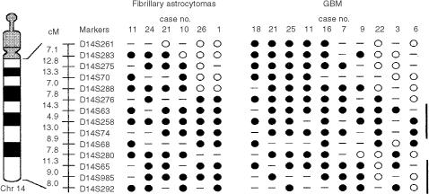 Delineation of common region of deletion on chromosomal