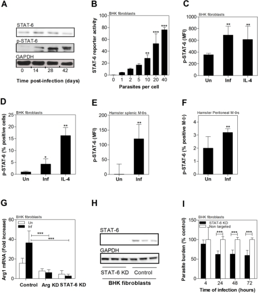 Role of parasite-induced STAT6 activation in host arg1